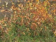 7th Oct 2019 - Autumn