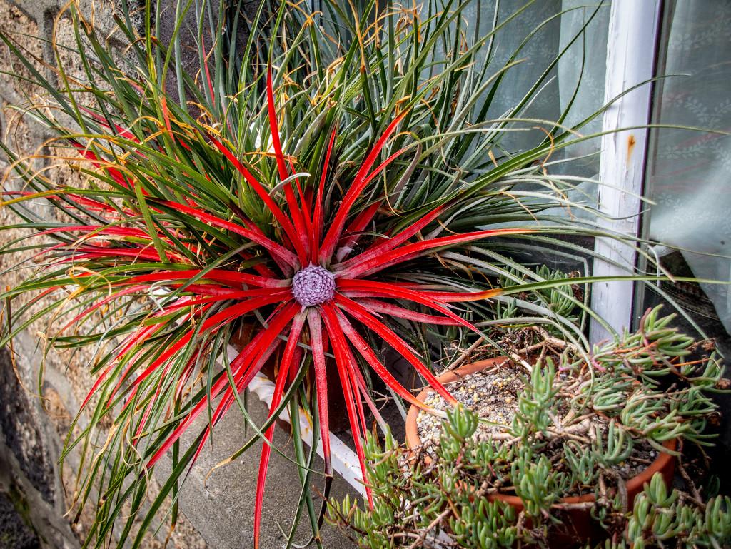 Plant by swillinbillyflynn