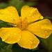 Flower and Rain!