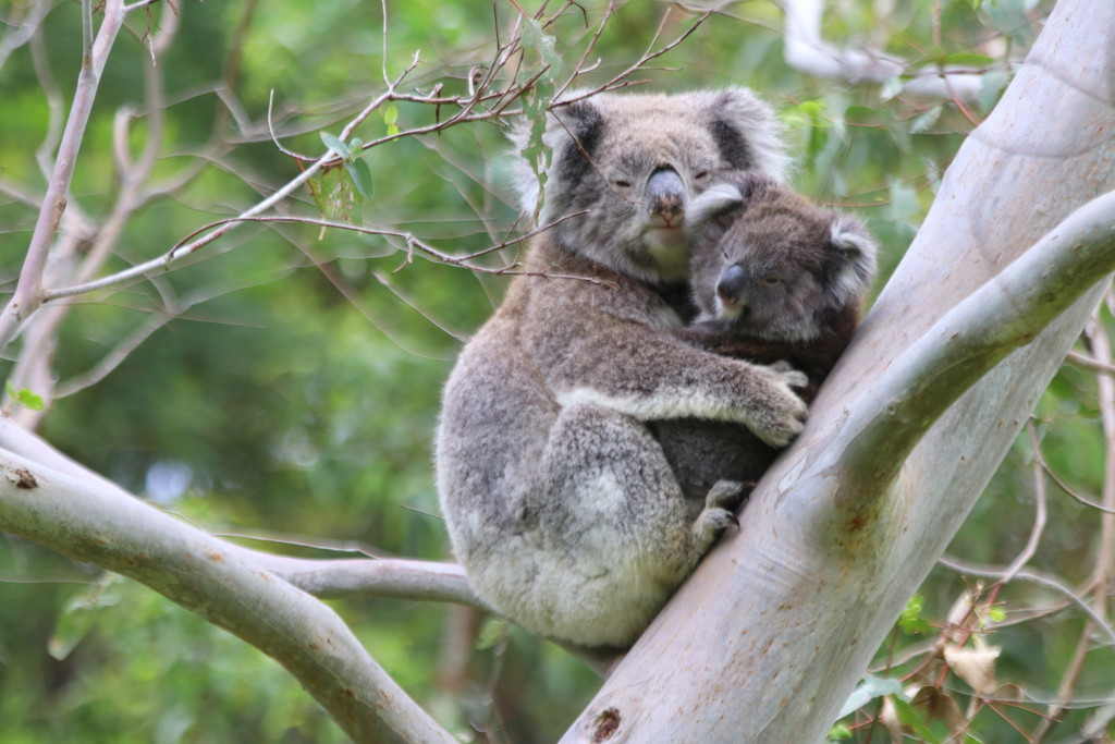 Another Aussie family by gilbertwood
