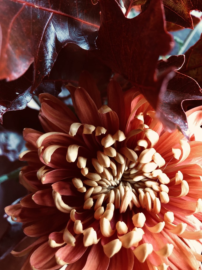 Autumn flower by jacqbb