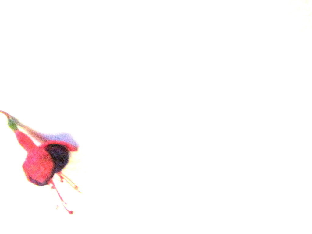Tiny flower  by bruni