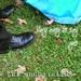 Album Cover Challenge #110 - Jack Smith Cricketer
