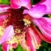 Buba na cvijetu