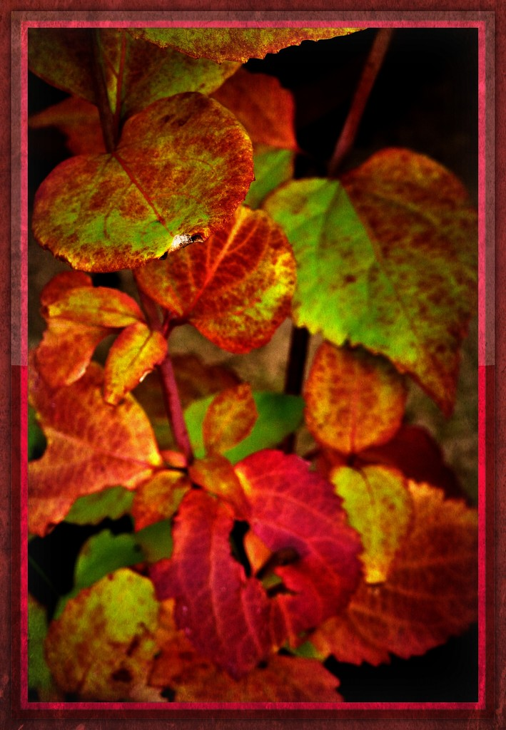 Autumn leaves  by beryl