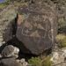 LHG_7604 Petroglyph Natl Monument