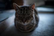 10th Oct 2019 - Ruby Cat