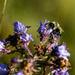 Fall Nectar