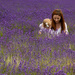 Down in the Lavender by shepherdmanswife