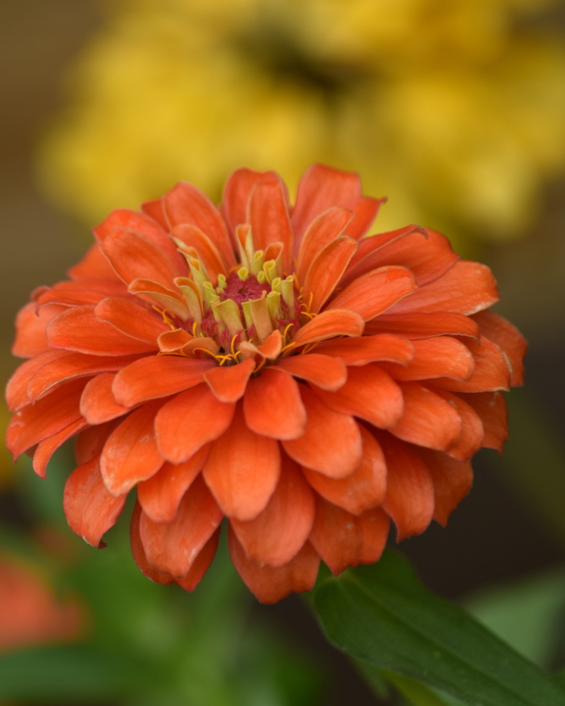 Orange October by genealogygenie
