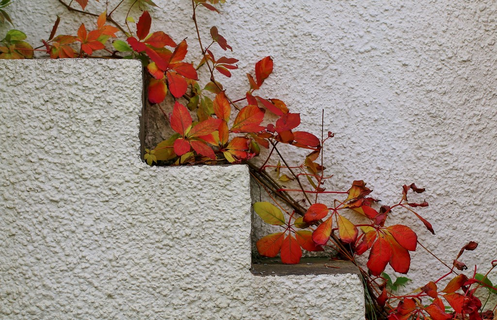 Three Steps of Autumn by motherjane