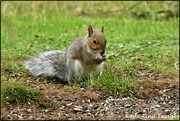 11th Oct 2019 - RK3_2692  I can never resist a squirrel