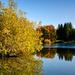 More autumn in Ringve Botanical Garden