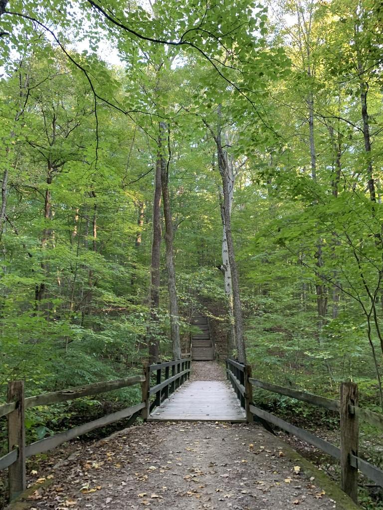 Woodland walk by kdrinkie
