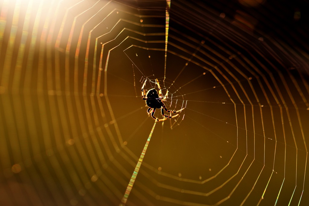 The Spider Weaves A Sticky Web by lynnz