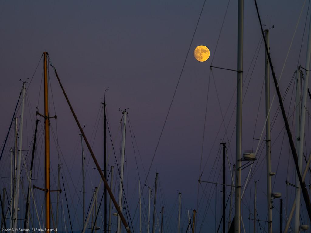 Moon Over Santa Barbara Harbor by taffy
