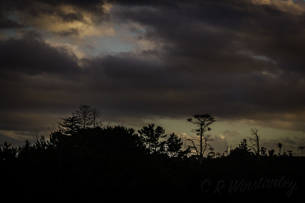 Evening Silhouette by kipper1951