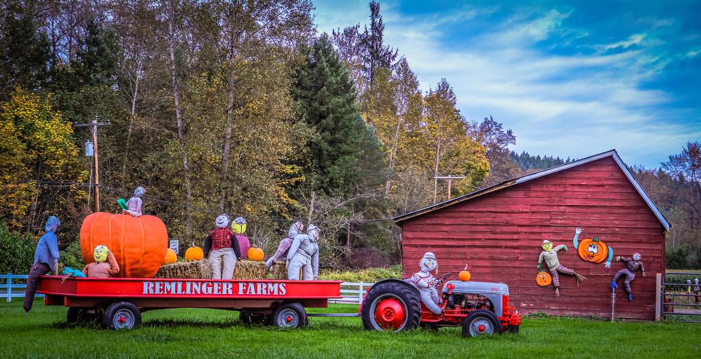 Pumpkin Farm Fun by vickiem