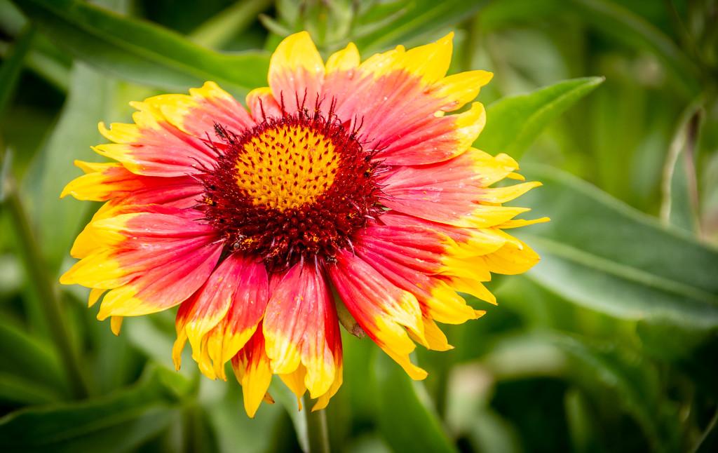 Flower by swillinbillyflynn