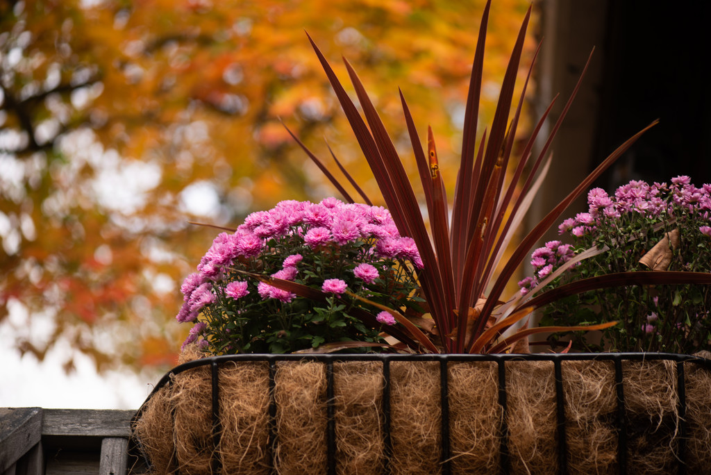 Fall colors by dianen