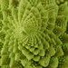 The patterns in nature - are amazing!