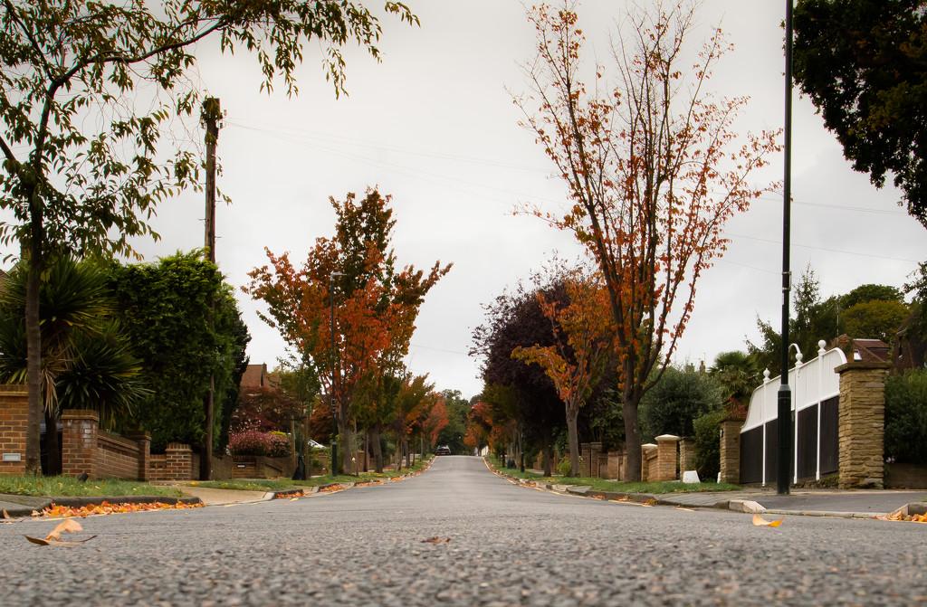 Autumn is here... by peadar