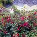 Wet Fuchsia