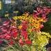 Colour pop at the garden centre