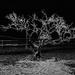 Mangrove - Seeing-to