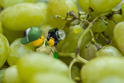 13th Oct 2019 - (Day 242) - A Grape Fit for a Legographer