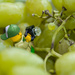 (Day 242) - A Grape Fit for a Legographer