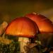 The mushroom  by haskar