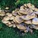 A fungi pile!