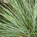 12th Oct blue grass