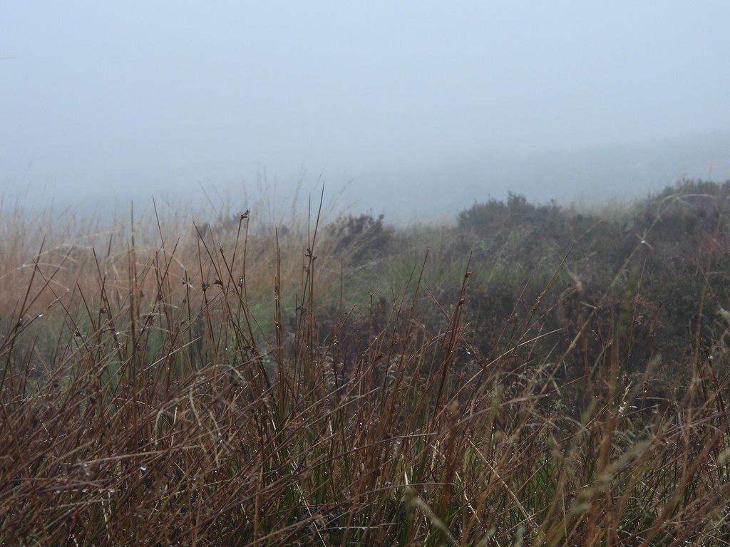 Damp and misty on the moors by roachling