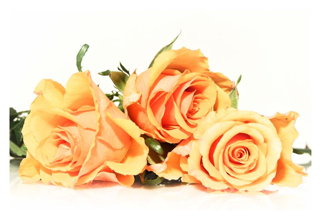 polarr roses by 30pics4jackiesdiamond