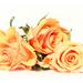 polarr roses