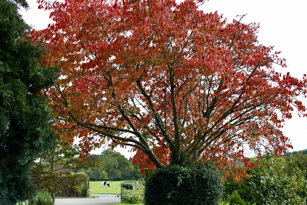 More Autumn Colour by carole_sandford