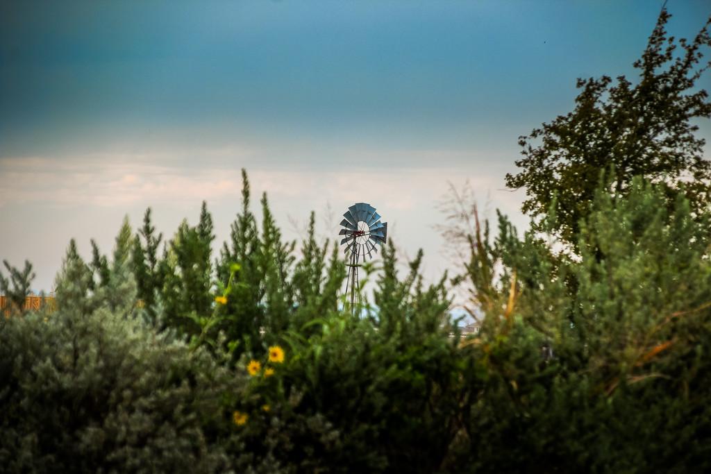 Windmill by judyc57
