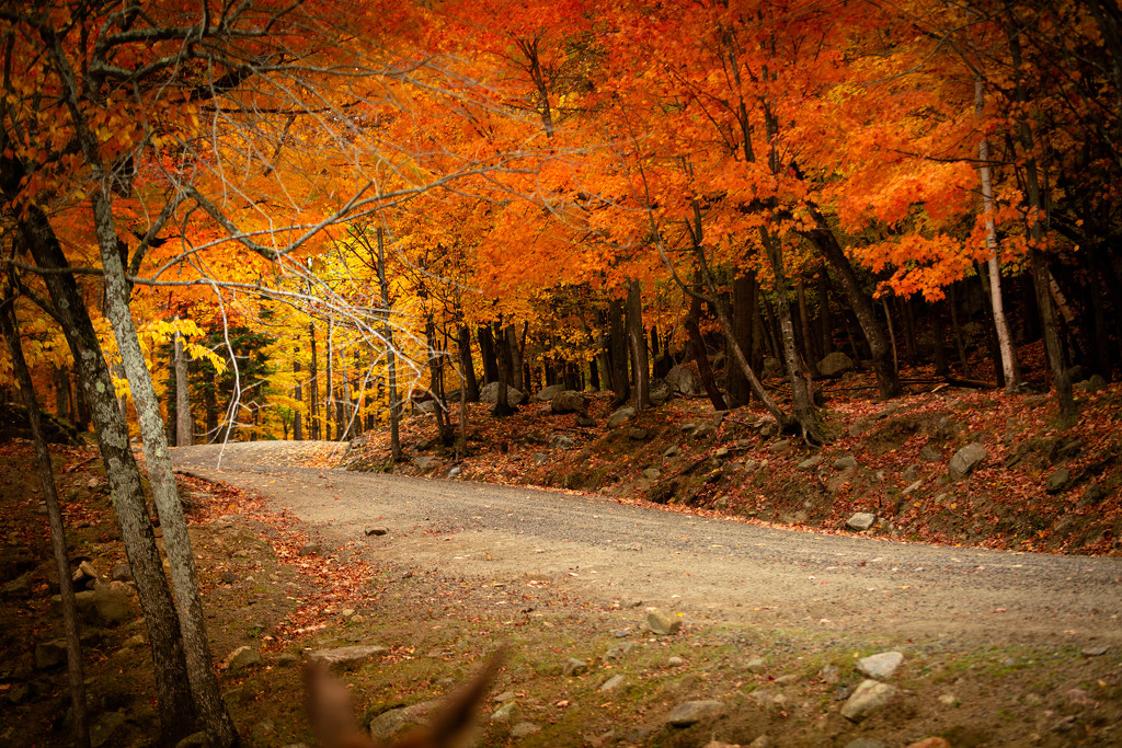 fall day by adi314