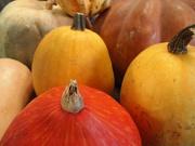 13th Oct 2019 - Squash and Pumpkins