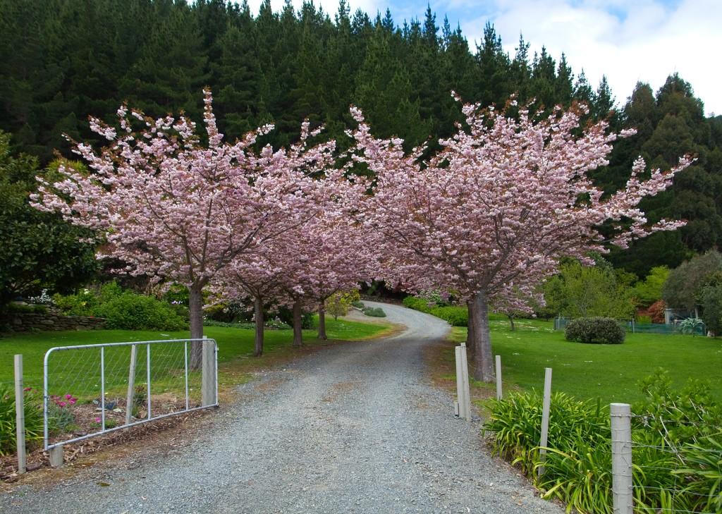 Gateway to the blossom  by kiwinanna