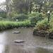 Ducks Sheltering From The Rain