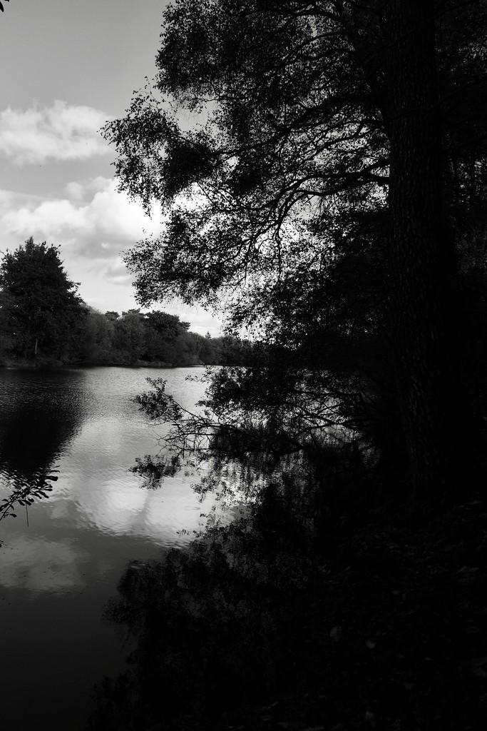 Trégu Lake & Woodland by s4sayer