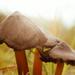 sorft focus on mushrooms