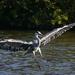 Heron Landing.
