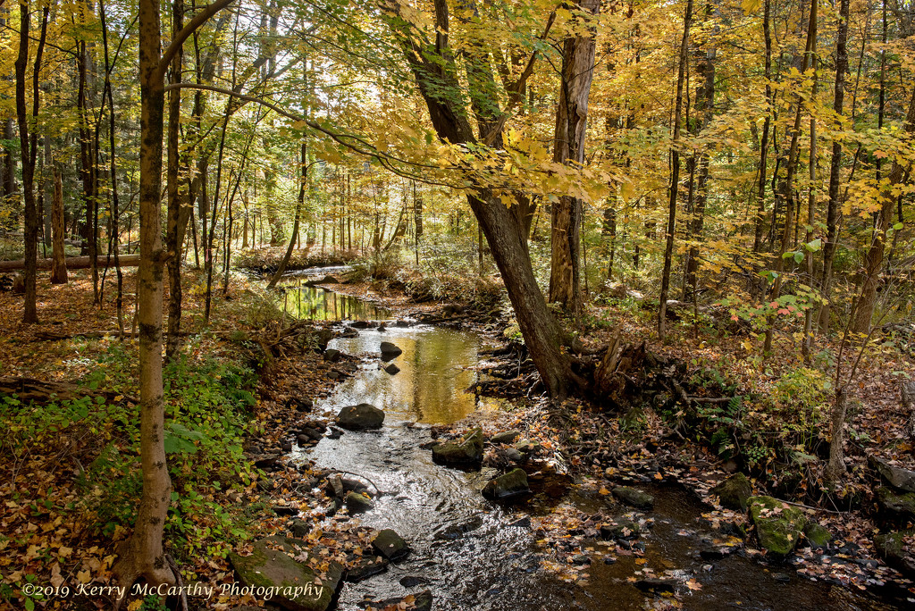 Babbling brook by mccarth1