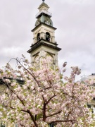 16th Oct 2019 - Spring in the City