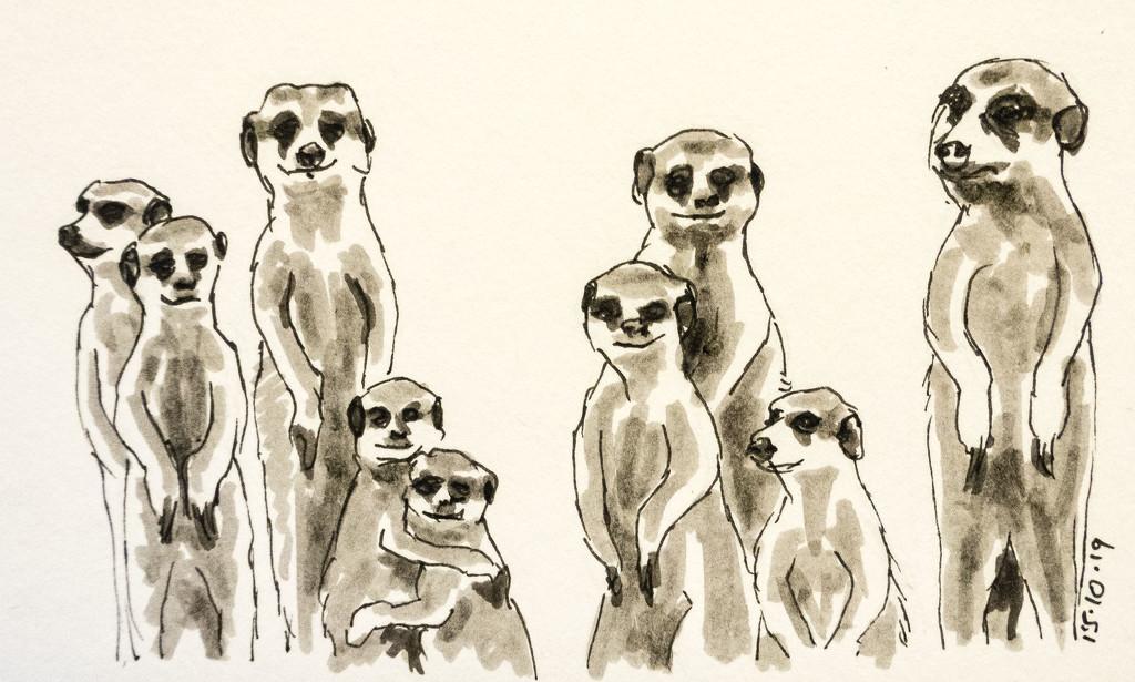 Meerkats by harveyzone