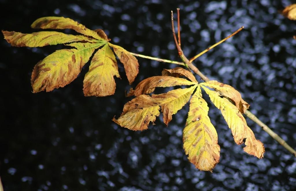 Leaves by carole_sandford